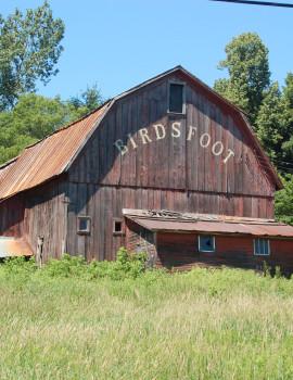 Birdsfoot Farm