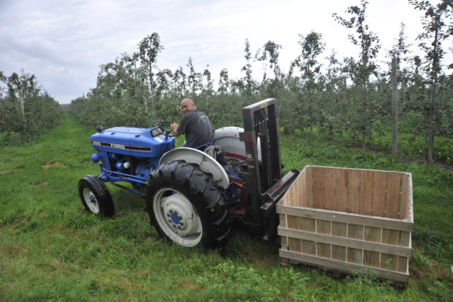 Moving crates through the orchard. Forrence Orchards, Peru, NY, 2009.