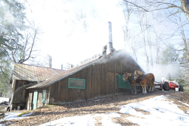 The horses wait outside the boiling shed at Yancey's Sugarbush, 2010.