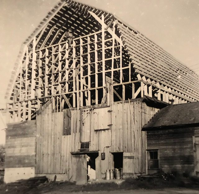 Loretta says her father John (pictured straddling the high cross plank), would have been an amazing engineer. Self-taught beyond his eighth grade education, he figured out countless challenges, from using the snowbanks to roll heavy logs, to building this 50' high and 140' long barn for loose hay and dairy cows on the farm. He built the structure largely on his own, with one friend helping occasionally. Photographer and date unknown. Courtesy of Loretta Lepkowski.